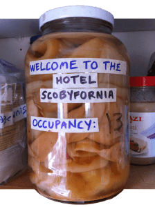 hotel scoby cutout half size