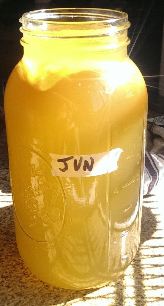How to grow a jun scoby mother from scratch