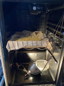 koji in the curing chamber